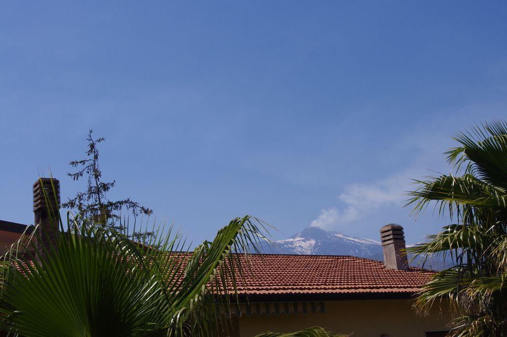 Gli Ulivi dell'Etna