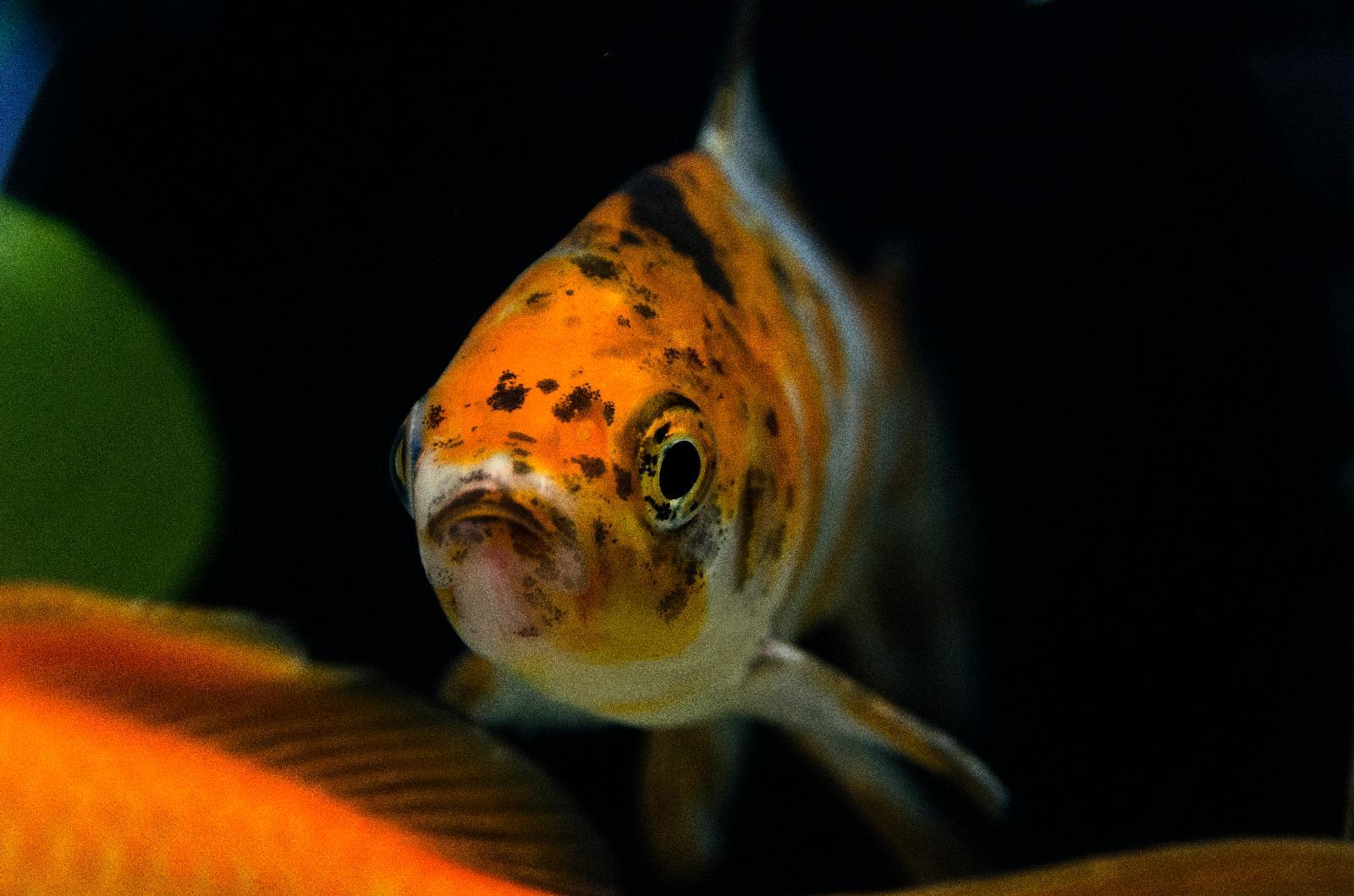 18. Agua De Mar Hotel Boutique